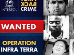 Interpol lança operação para prender 139 criminosos ambientais de 36 países