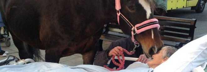 Inglesa morre após cumprir último desejo: dar adeus a seus cavalos