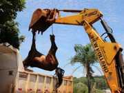 Égua debilitada é resgatada em Apucarana, PR