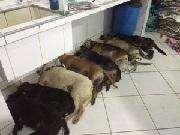 Delegada especial é nomeada para investigar envenenamento de cães em Maceió