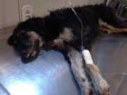 Após morte de cães envenenados, ONGs cobram delegacia de animais