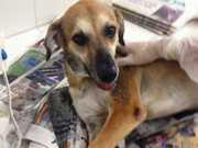 Oito animais são mortos por envenenamento dentro de ONG em Maceió