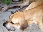 Cão desnutrido é resgatado após ser abandonado em residência no AM