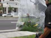 Laudo sobre a morte de periquitos em Manaus fica pronto nesta sexta-feira (19)