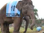Zoo argentino que deixa visitante entrar na jaula pode ser fechado