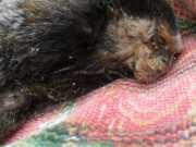 Micos aparecem mortos em quintal de Cruz das Almas, BA