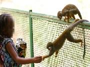 Vereador pede interdição do zoológico de Salvador