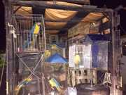 PRF apreende aves silvestres e veado mantido em cativeiro há dois anos durante operação na BA