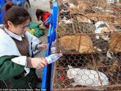 Ativistas e autoridades chinesas resgatam mais de 1.000 gatos que seriam sacrificados para consumo humano