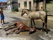 Égua atropelada fica 24h caída em rua até ser retirada, no ES
