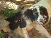 Moradores de Santa Luzia (MG) pedem ajuda para cachorro queimado no Natal