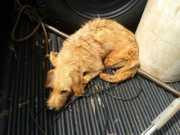 Cães com sinais de maus-tratos são resgatados em Uberlândia, MG