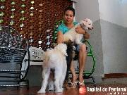 Grupo voluntário combate maus-tratos contra animais em Corumbá e Ladário, MS