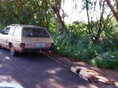 Condutor de carro arrasta cachorro por avenida e causa revolta em moradores