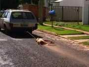 Pastor flagrado arrastando cachorro em carro disse que animal morreu de virose