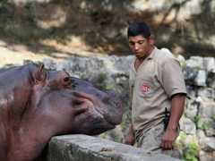 Zoo em Recife pode ser interditado