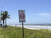 Meio Ambiente do PR dá dicas sobre como levar animais 'de estimação' para as praias