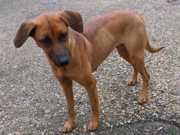 Portugal: Adoção de animais triplicou em seis meses em Coimbra