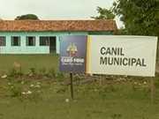 Protetores denunciam problemas no canil municipal de Cabo Frio, no RJ