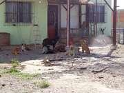 Ataques de cães em Rio das Ostras, RJ, deixam moradores em alerta