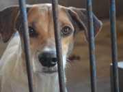 Pesquisa revela razões que levam pessoas a abandonar animais, em RO