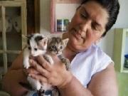 Padrinhos virtuais ajudam a manter novo lar de animais abandonados