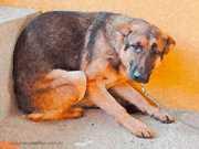 Projeto de Lei propõe instalação de placas sobre crimes contra os animais em Blumenau, SC