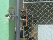 Denúncias de maus-tratos levam Prefeitura de Blumenau (SC) a proibir o aluguel de cães de guarda