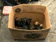 Cinco filhotes de cachorro são abandonados em depósito de lixo