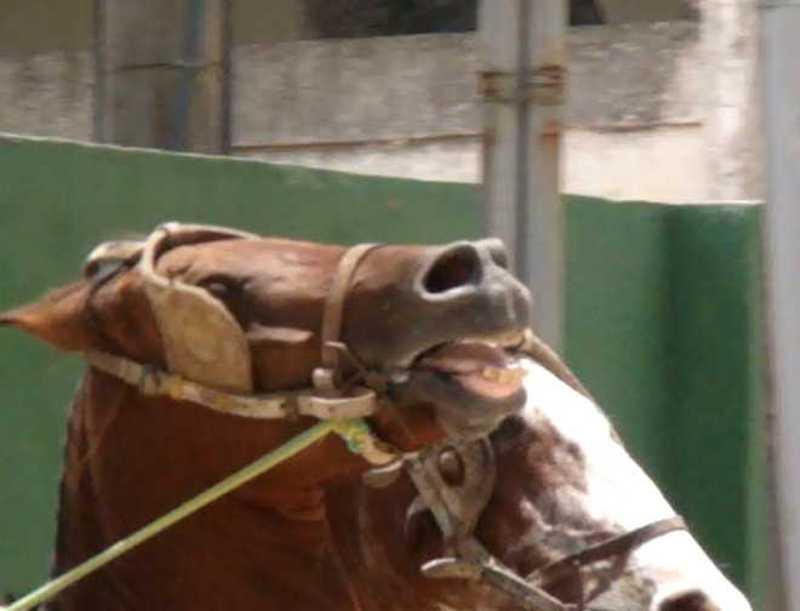 Freio na boca do cavalo serve para quê? Explicações de Alexander Nevzorov
