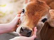 Alma, razão e senciência nos animais