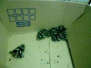 Polícia Ambiental apreende filhotes de patos selvagens