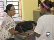 Araraquara, SP, inaugura ambulatório para cães e gatos de famílias carentes