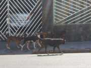 Acordo entre MP e Prefeitura quer solução para animais abandonados em Buritama, SP