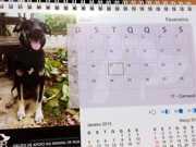 ONG lança calendário de animais adotados para financiar castrações