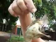 Servidor público é afastado por matar passarinho no trabalho e postar vídeo