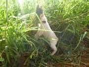 Jovem mata gato enforcado em Novo Horizonte, SP