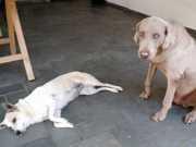 Moradora recebe carta anônima ameaçando cachorros de morte