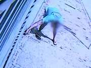 Suspeito de envenenar cães em Sorocaba (SP) não comparece à delegacia