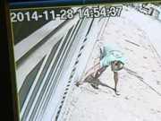 Polícia identifica exterminador de cães em Sorocaba, SP