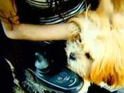 Deficiente procura por cachorrinha que desapareceu na zona leste de SP