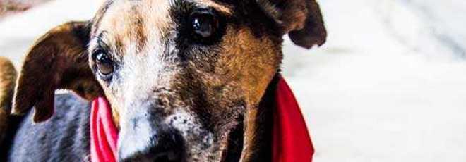 Prefeitura de SP promove campanha de Natal para adoção de animais 'idosos'