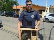 Caseiro é detido em Valinhos, SP, com animais em situação de maus tratos