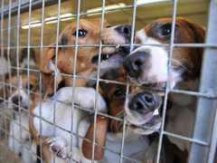 No Brasil, 41% da população é contra testes com animais, segundo Datafolha