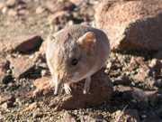 Divulgada nos EUA lista de espécies descobertas por pesquisadores em 2014