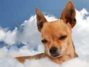 Papa Francisco afirma que os animais vão para o céu quando morrem