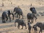 Bebês elefantes de Zimbábue são levados para circos na China