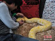 Jovem chinês de 25 anos viveu com cobras nos últimos 10 anos