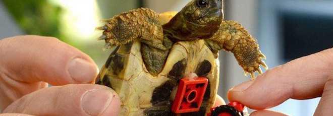 Veterinário cria 'cadeira de rodas' para tartaruga com peças LEGO; vídeo