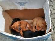 Filhotes de cachorro são encontrados em mangue em Joinville, SC